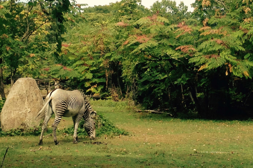 Zoo_Bronx_073